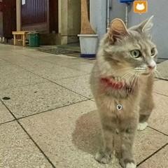 Японці створили додаток, який допомагає досліджувати світ з точки зору котів (фото)