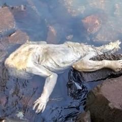 Парагвайські рибалки повідомили, що знайшли тіло чупакабри (відео)