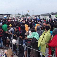 Австрійці запровадять жорсткі закони для біженців