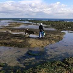 На Одещині сталася аномалія: море відступило від берегів (ФОТО)