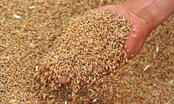 Україна зможе замінити Росію натурецькому ринку зернових