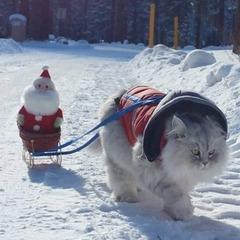 Кіт-мандрівник став зіркою Instagram (ФОТО)