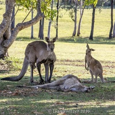 Мережу розчулив знімок справжньої материнської любові у тварин (фото)