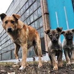 Рішення проблеми: окупанти планують отруїти бездомних тварин