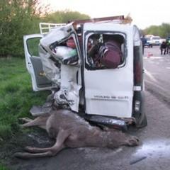 На Житомирщині лось спричинив масштабну ДТП, загинув нацгвардієць