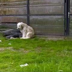 У Румунії пес 5 років сидить біля будинку померлого господаря (фото)