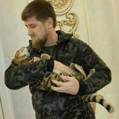 Кадиров просить передплатників в Instagram допомогти знайти його зниклу кішку