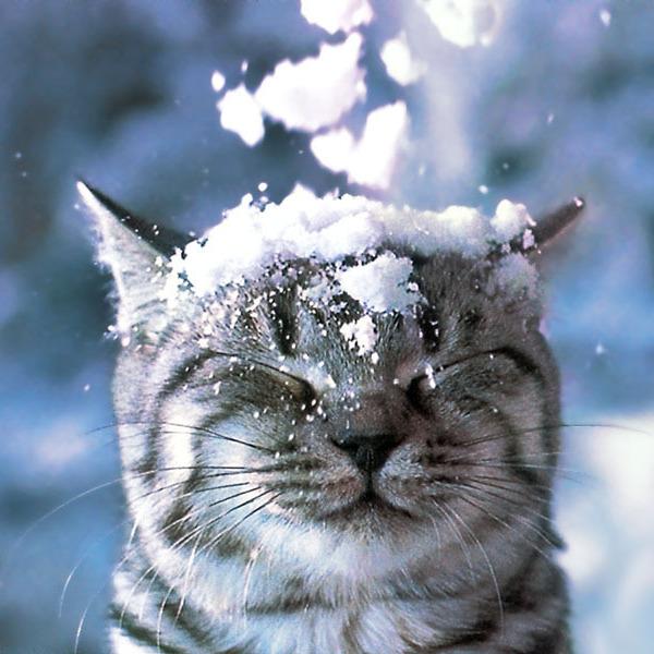 Укргідрометцентр попереджає про заморозки