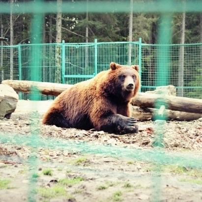 В зоопарку ведмідь відкусив дитині руку
