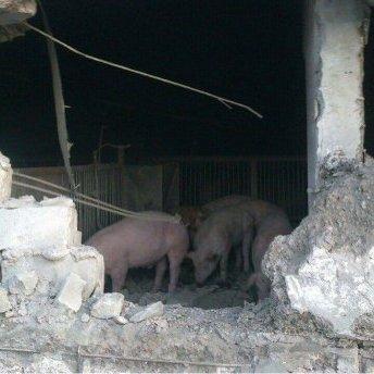 Ці тварюки вже зі свинями воюють, - Аброськін прокоментував смертоносну атаку терористів