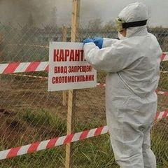 На Одещині об'явили карантин, через спалах чуми