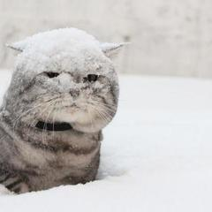 В Україну йдуть морози та сильні снігопади