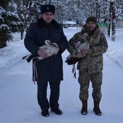 Прикордонники врятували лелек, яким забракло сил відлетіти у теплі краї (фото)
