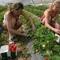 Українські заробітчани «годують» польських пенсіонерів