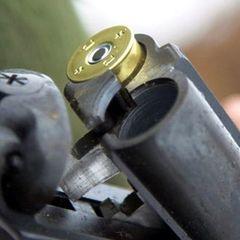 Киянин під час полювання застрелив племінного коня вартістю понад 50 тисяч євро