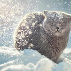 Україну накриє снігопадами