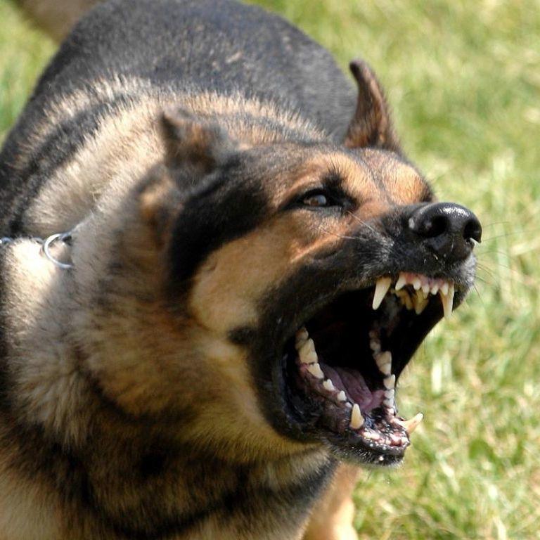 На Херсонщині чоловіка на смерть загризли 3 собаки