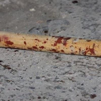 Колядник на Закарпатті побив палицею водія автомобіля