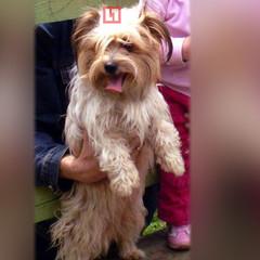 В Росії господарі кинули собаку в аеропорту та полетіли до Німеччини