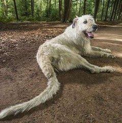 У Бельгії собака встановив світовий рекорд завдяки довгому хвосту (відео)