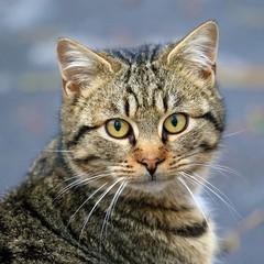 Кіт залишив без світла понад дві тисячі осіб в карельському місті