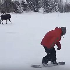 На гірськолижному курорті дикий лось погнався за сноубордистами (відео)