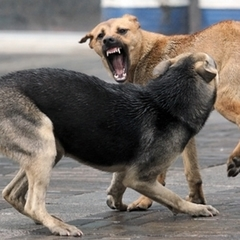 У Києві чоловік став жертвою бездомних собак