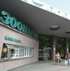 Чудо природи. В київському зоопарку вивели 4 чорних лелеки