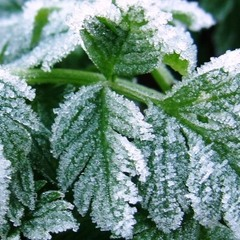 Синоптики прогнозують до 5 градусів морозу