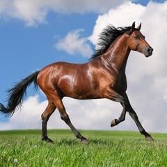 Мережу обурило відео, де люди знущаються над конем (відео)