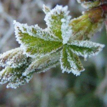 Прогноз погоди на 15 квітня: заморозки та дощі