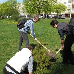 Миколаївський пенсіонер посадив 20 тисяч дерев