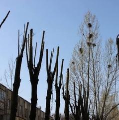 Діти були в шоці: На Київщині комунальники жорстоко повелися з гніздами із маленькими пташенятами (відео)