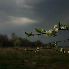 Прогноз погоди на 8 травня: всю Україну накриють весняні дощі з грозами, місцями – град