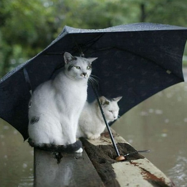 Не забудьте парасольки: погода у столиці