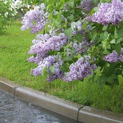 В Україні буде кілька погожих днів, а до неділі прийдуть дощі
