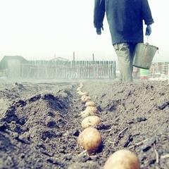 На Львівщині селянин помер під час садіння картоплі