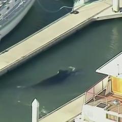 У гавані біля узбережжя Каліфорнії застряг кит (відео)