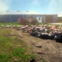На Хмельниччині загинула сотня корів через навмисне отруєння (відео)
