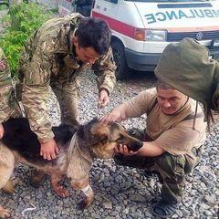 Собака-рятівник прикрив собою двох бійців АТО під час ворожих обстрілів на Донбасі (фото)