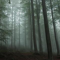 В Німеччині чоловік знайшов у лісі немовля біля мертвої матері