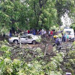 На Львівщині загинув чоловік через падіння із дерева