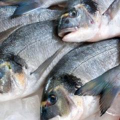 В Україні введуть європейську систему сертифікації риби