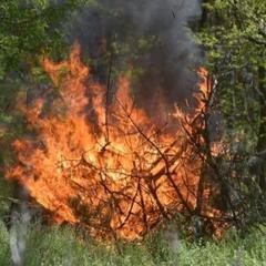 На 16-18 червня синоптики прогнозують високу пожежну небезпеку