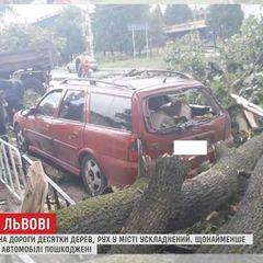 Стихія у Львові повалила дерева і пошкодила лінії електропередач