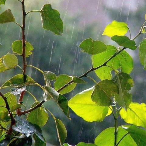 В Україні сьогодні пройдуть дощі, на півдні до +31° (карта)