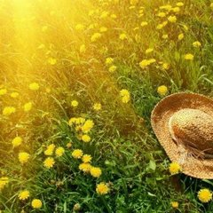 Протягом тижня в Україні пануватиме пекельна спека, яку на вихідних змінить невелике похолодання (карта)
