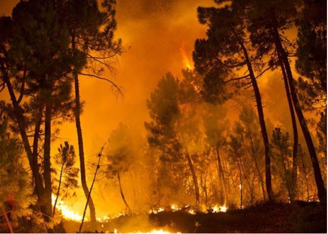 В Італії арештували 15 пожежників, щовлаштовували пожежі заради компенсації