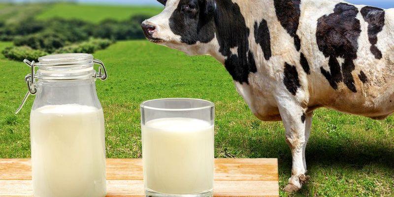 На Львівщині відкрили п'ять сімейних молочних ферм