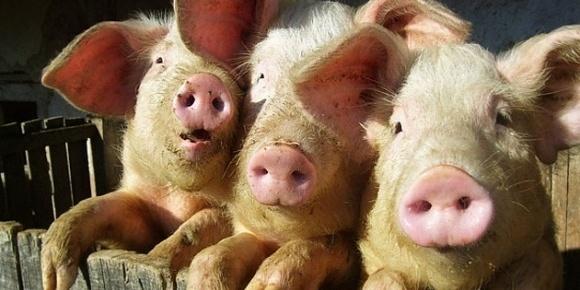 В Україні запустять три заводи з переробки відходів тваринництва